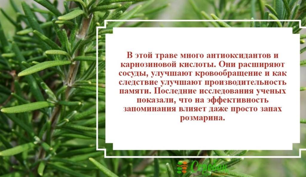new-piktochart_172_3afb867a2e60209df01a7c5f31ae7621f352ea5b